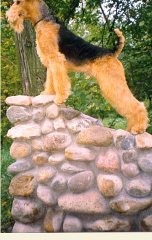 http://www.airedale.ru/images/pic2.jpg